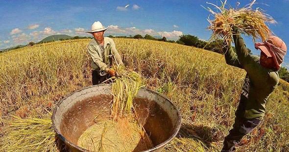 粮食连年丰收自给率高 储备调控体系不断完善