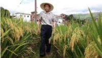 各地积极施策 哪些因素影响农民种粮意愿