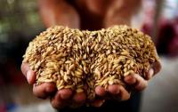 2020年中储粮销售政策性粮食1.05亿吨